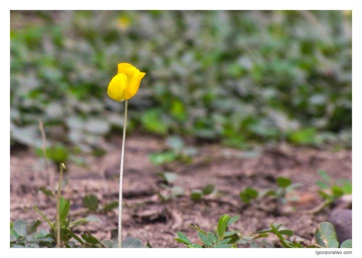 jardim_amarelo